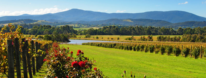 Yarra Valley near Melbourne, Australia