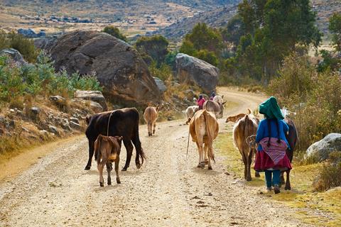 Farming in Peru © Duncanandison | Dreamstime.com
