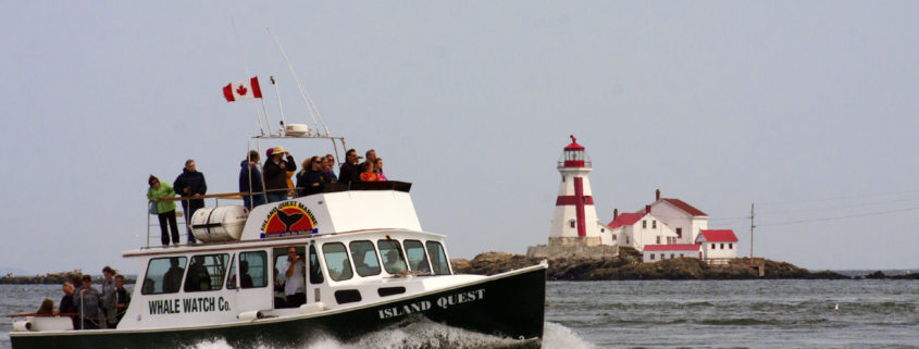 St Andrews, New Brunswick, Canada, WhaleWatch