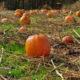 Pumpkin Patch in Pennsylvania Farm
