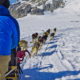 Dog sled team training in Alaska