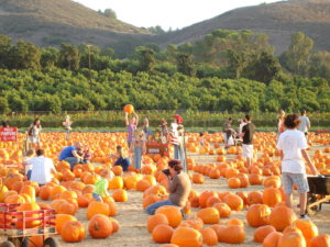 Pumpkin Patch © Underwood Family Farms