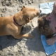 Dog and boy playing on the beach in California © Pniesen - Dreamstime.com