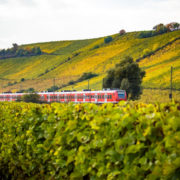 Vineyard Train Tour © Matthias Lindner | Dreamstime.com