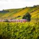 Vineyard Train Tour © Matthias Lindner | Dreamstime.com