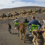 Camel Rides at Timanfaya National Park