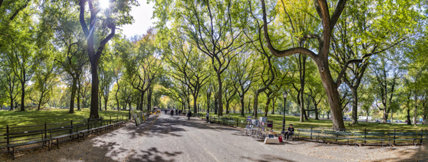 Central Park, New York © Meinzahn | Dreamstime.com