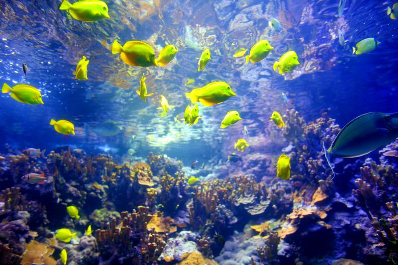 Tropical reefs in Maui © MNStudio | Dreamstime.com