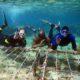 Growing coral © Reef Explorer Fiji