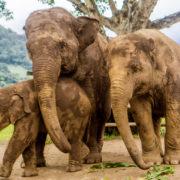 Elephant Nature Park, Thailand © Scott Biales | Dreamstime.com