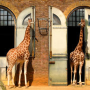 London Zoo © Kmiragaya | Dreamstime.com