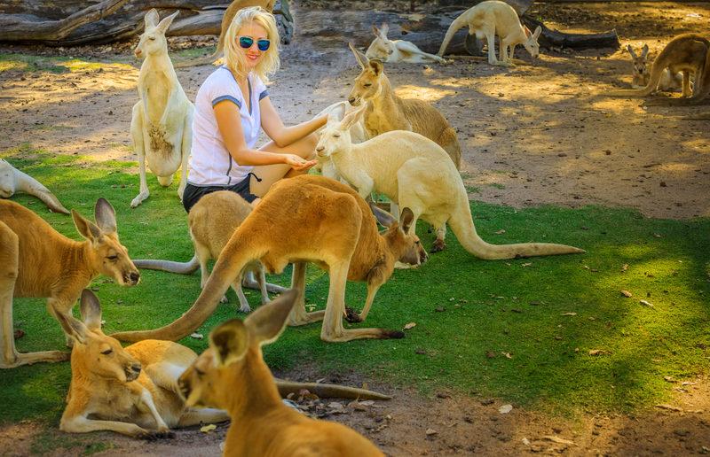 Feeding Kangaroos at Whiteman Park