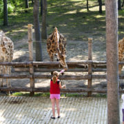 Kids petting giraffes at the zoo © Antares614 | Dreamstime.com