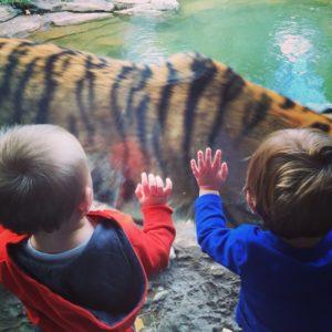 Tiger Exhibit at the Philadelphia Zoo© Cypress5s5 | Dreamstime.com