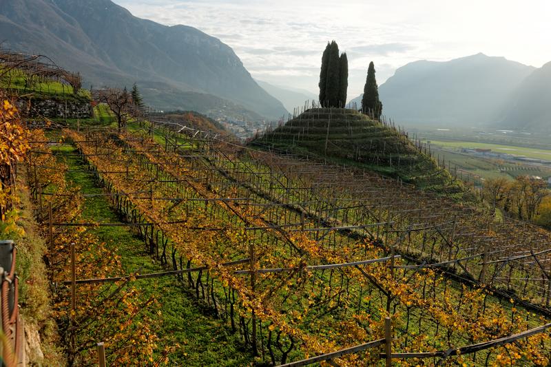 Vineyards of Trentino, Italy © Fedor Kondratenko   Dreamstime.com