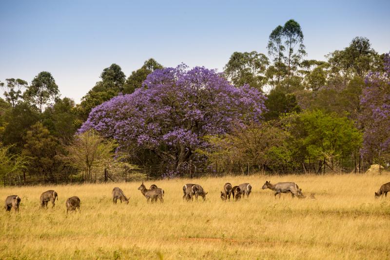 Wildlife Sanctuary in Africa © Maximiliane Wagner | Dreamstime.com