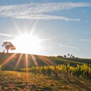 Paso Robles, California © Henryturner | Dreamstime.com