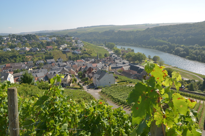 Moselle River vineyards in summer