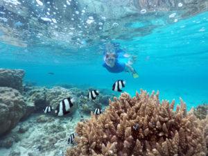 Woman snorkeling with fish in Rarotonga, Cook Islands © Rafael Ben Ari - Dreamstime.com
