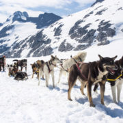 Dogsledding in Alaska © Adfoto | Dreamstime.com