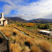 Winery, New Zealand. Photo: Cchotima | Dreamstime.com