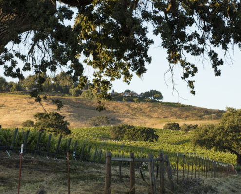 Santa Ynez vineyard, California © Matt Walla | Dreamstime.com