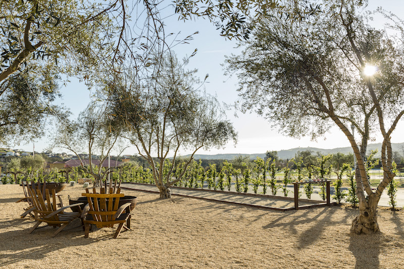 Views of the vineyard. Photo: Allegretto Vineyard Resort