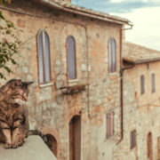 Italian cat at a villa in Tuscany.