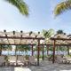 Palm trees in Mexico, Riviera Maya. Photo: Olga Bogatyrenko | Dreamstime.com