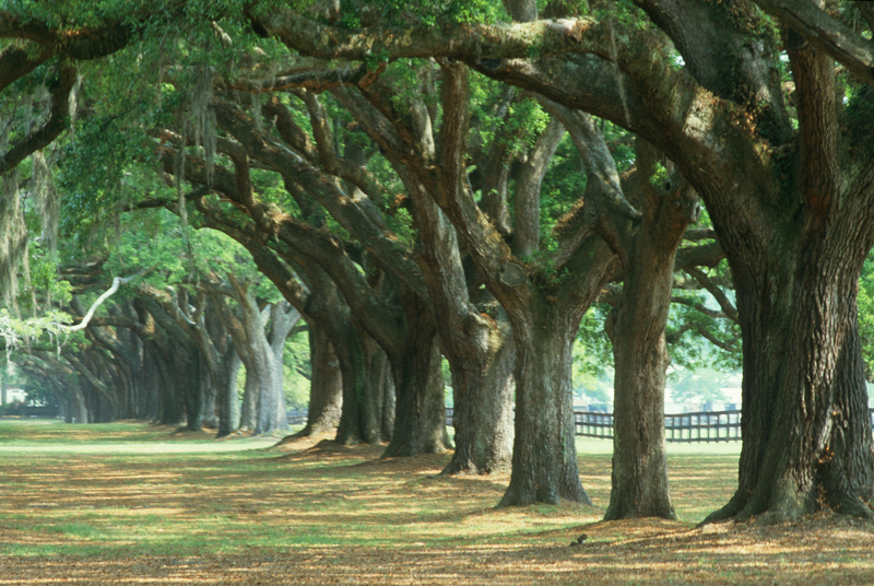 Boone Hall Plantation, Charleston, South Carolina.