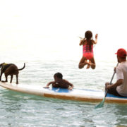 Surfing dogs. Photo: Turtle Bay Resort