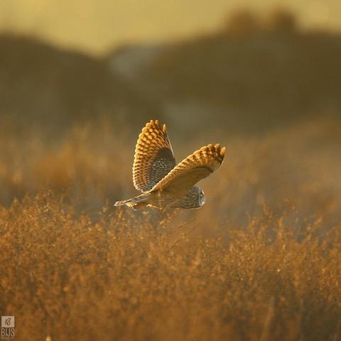 Photo: Benjamin Jacobs Schwartz/BIRDS By BIJS