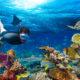 Exploring coral reef.