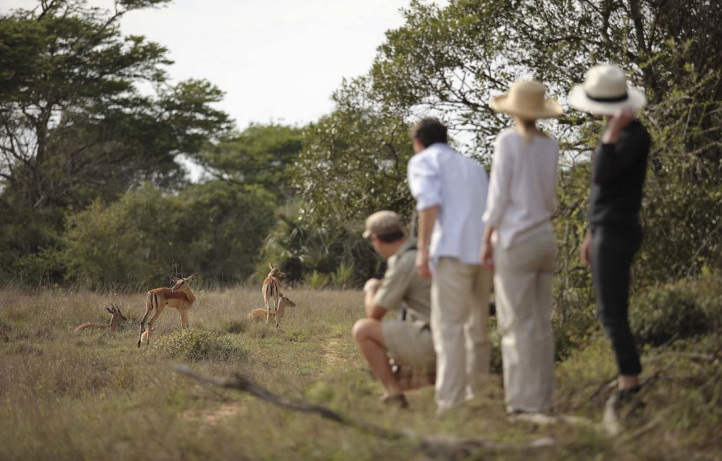 Guided bush walks at Phinda.