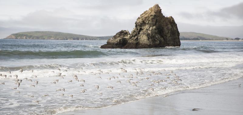 Bodega Bay Beach.