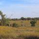 Franklyn Reserve, Bloemfontein