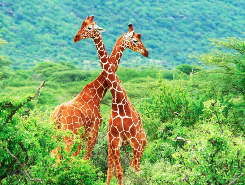 Kenya, Original Travel
