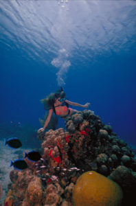 Scuba Diving in St. Croix