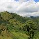 Landscape of coffee and banana plants in the coffee growing region near El Jardin, Antioquia, Colombia.