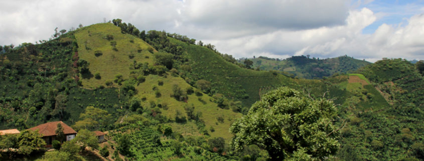 Landscape of coffee and banana plants in the coffee growing region near El Jardin, Antioquia, Colombia.