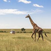 The Giraffe Centre in Nairobi, Kenya
