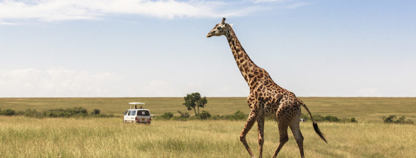 The Giraffe Centre in Nairobi, Kenya