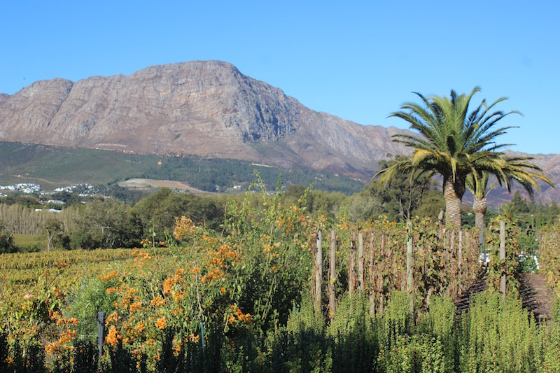 Franchhoek Leeue View.