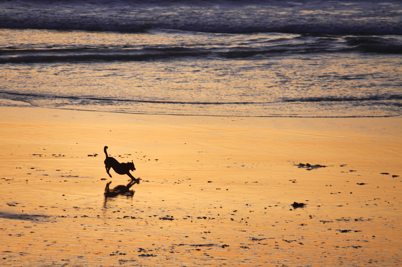 Evening play time on Monterey Bay beaches.