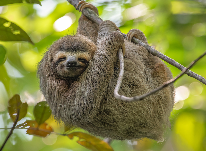 Sloth sighting in Costa Rica. Photo: Harry Collins | Dreamstime.com