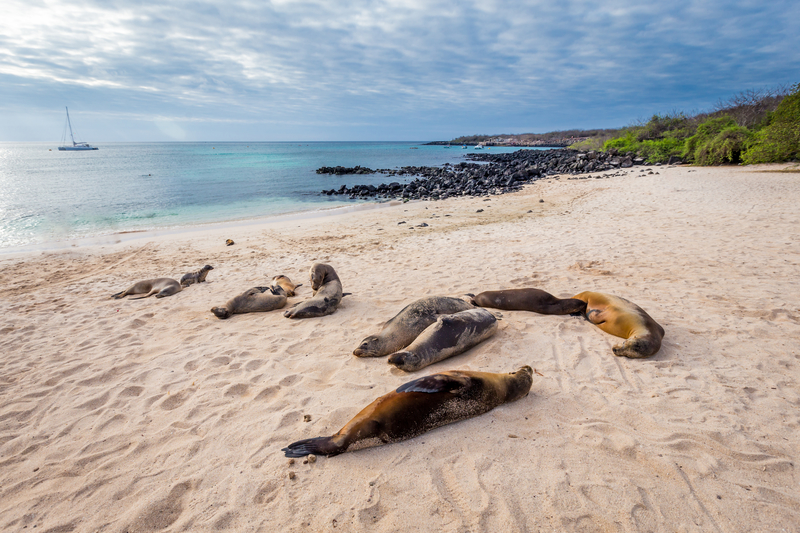 Sea lions resting on the Galapagos Island beaches.