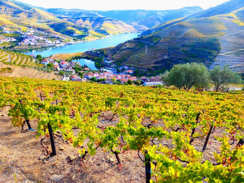 Terraced vineyards form the hillsides of the Douro River