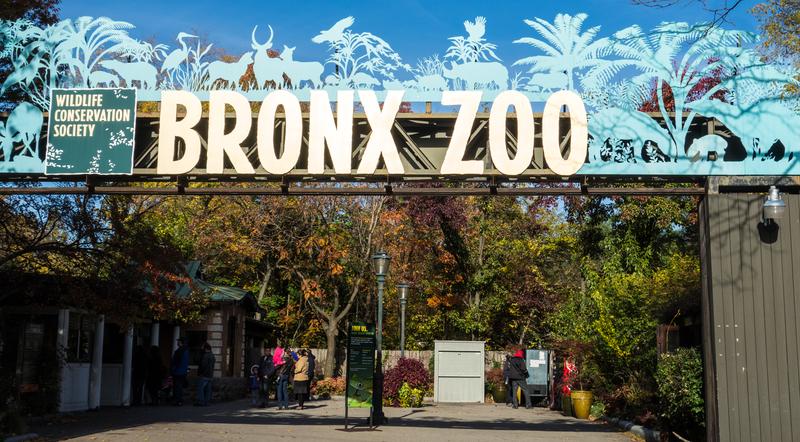Bronx Zoo Brings Back Holiday Lights